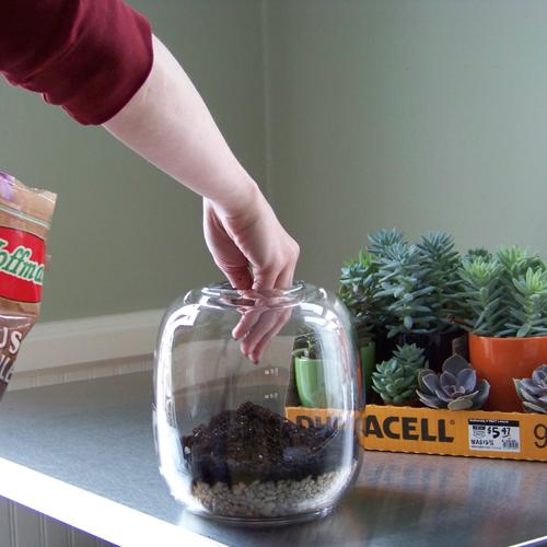 Plantar suculentas no terrário