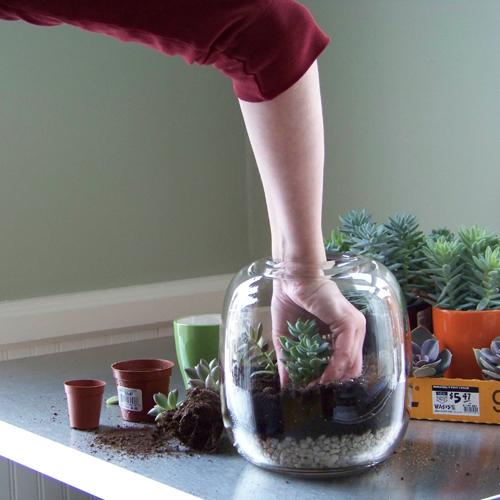 Vaso de Suculentas