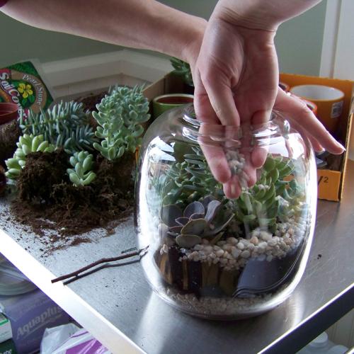 Plantar Suculentas