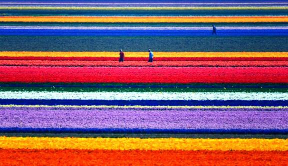 Holanda Flores