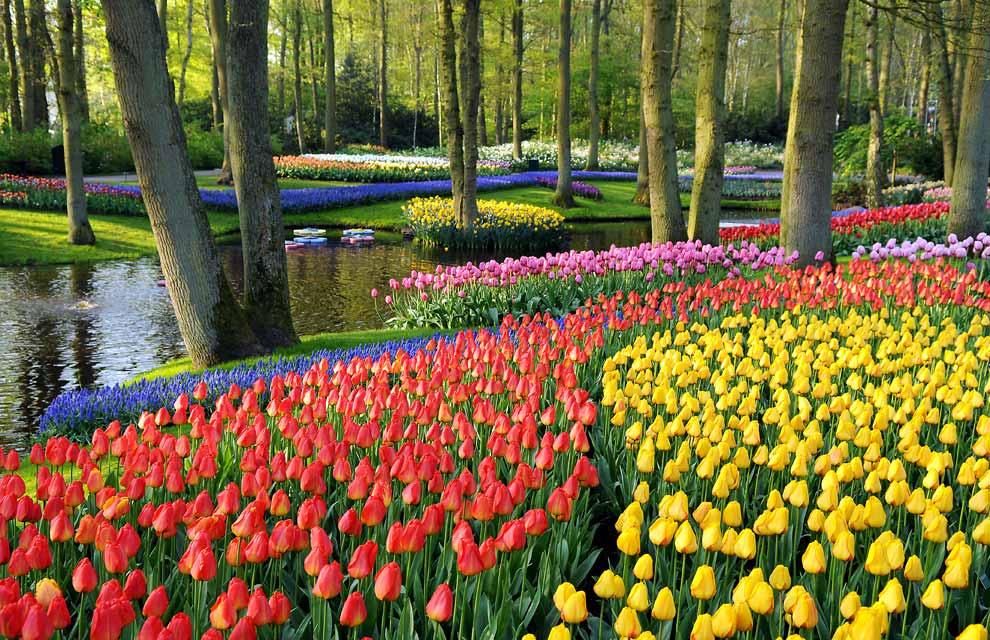 parque-flores