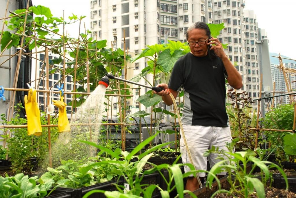 Jardins Comunitários