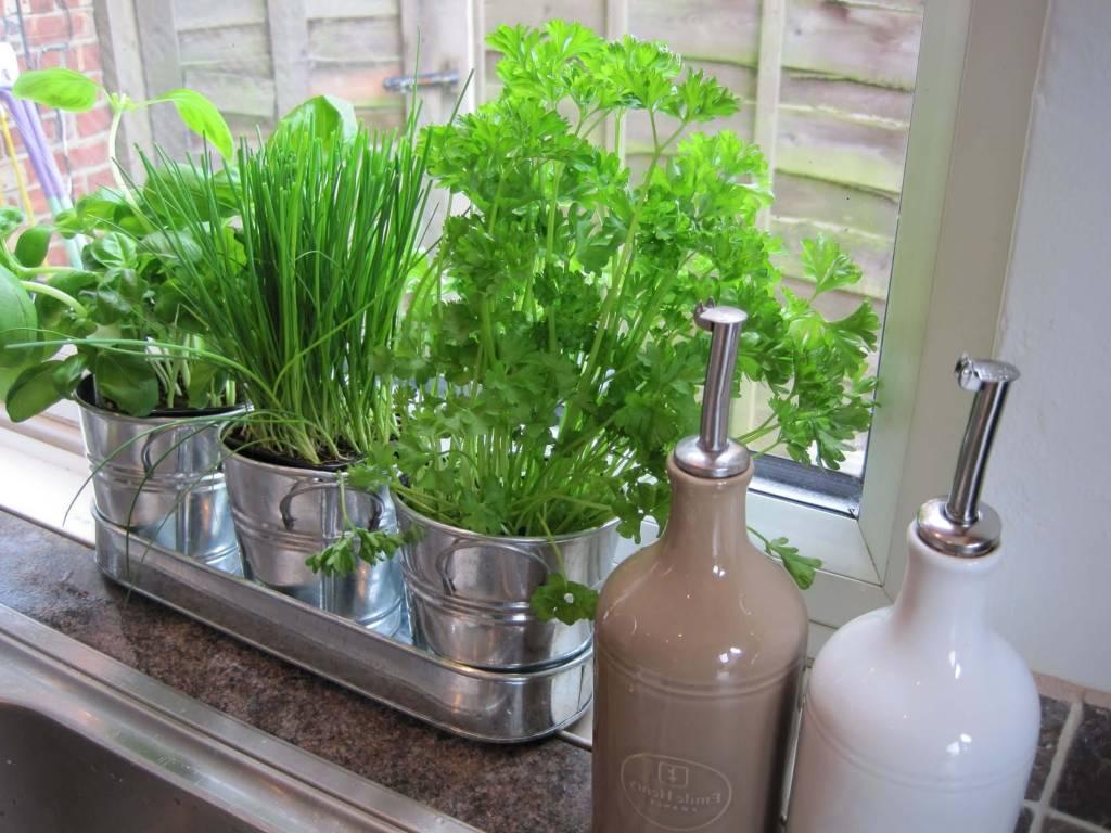 ervas para decorar a cozinha