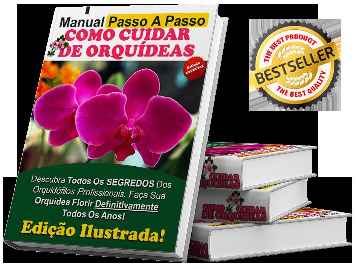 cuidar de orquideas