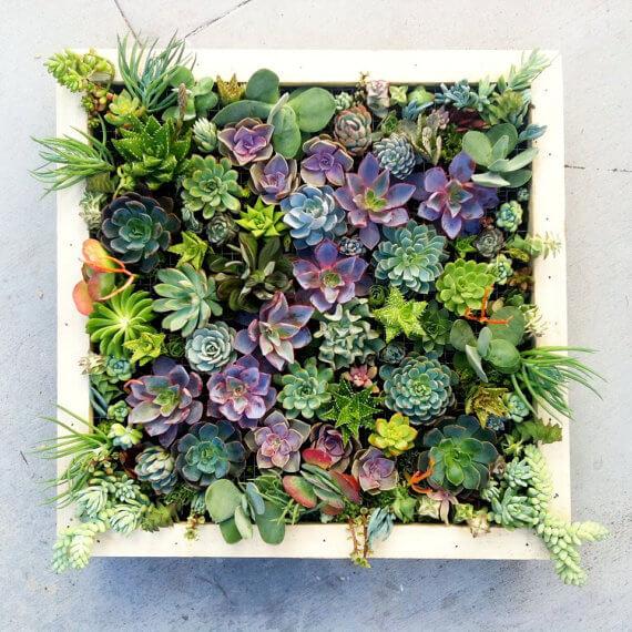 Espécies de Plantas para Jardim Vertical – Sol Pleno