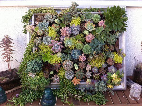 jardim vertical suculentas