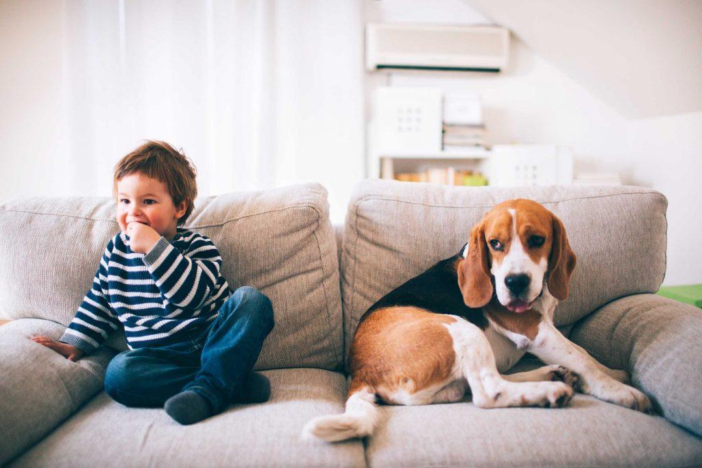como impermeabilizar sofá