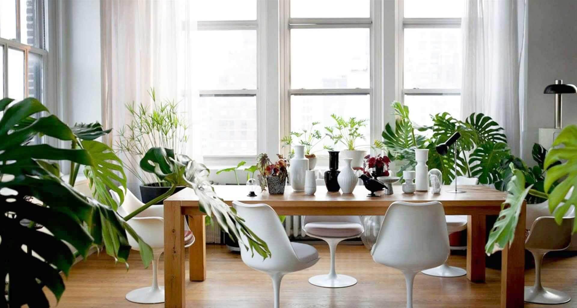 Plantas ornamentais esp cies para interiores arquidicas for Plantas para interiores de casa