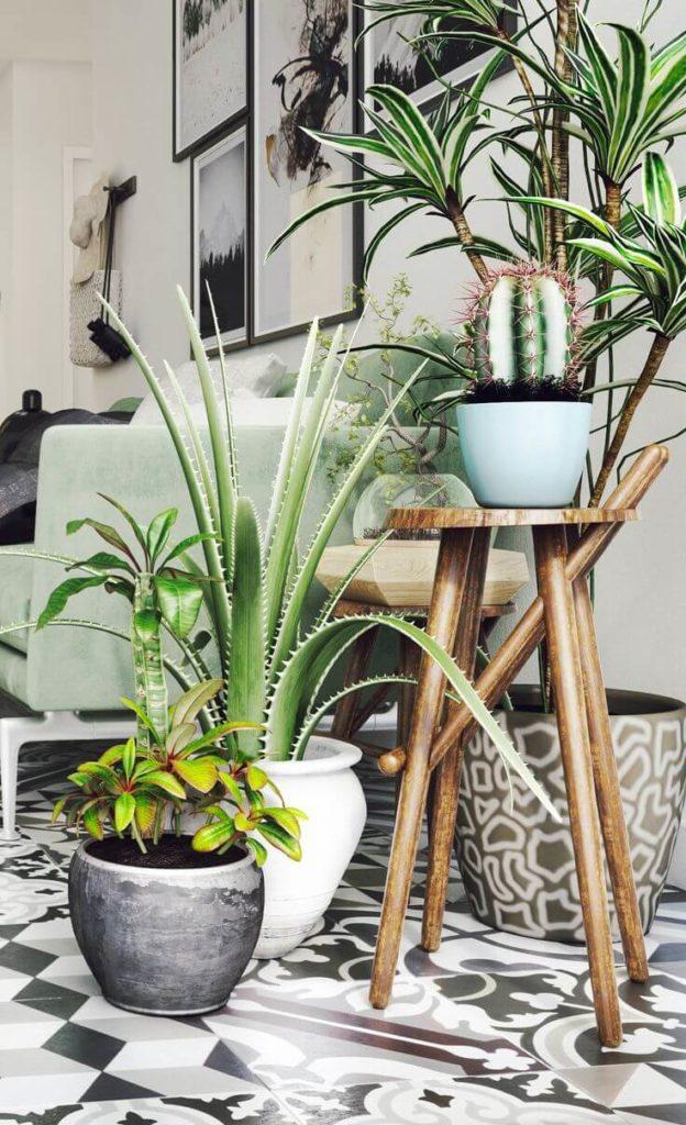 decoração com plantas ornamentais